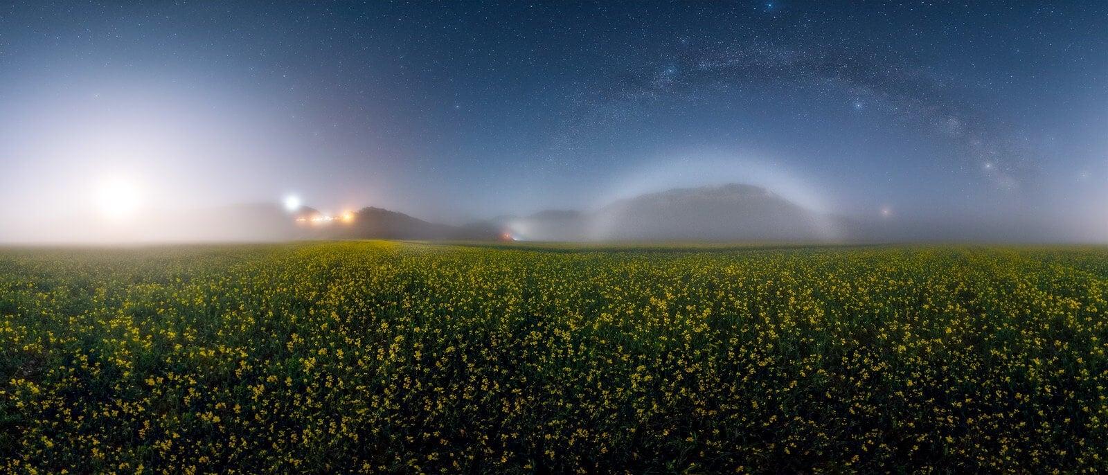 campo fiorito con nebbia e stelle