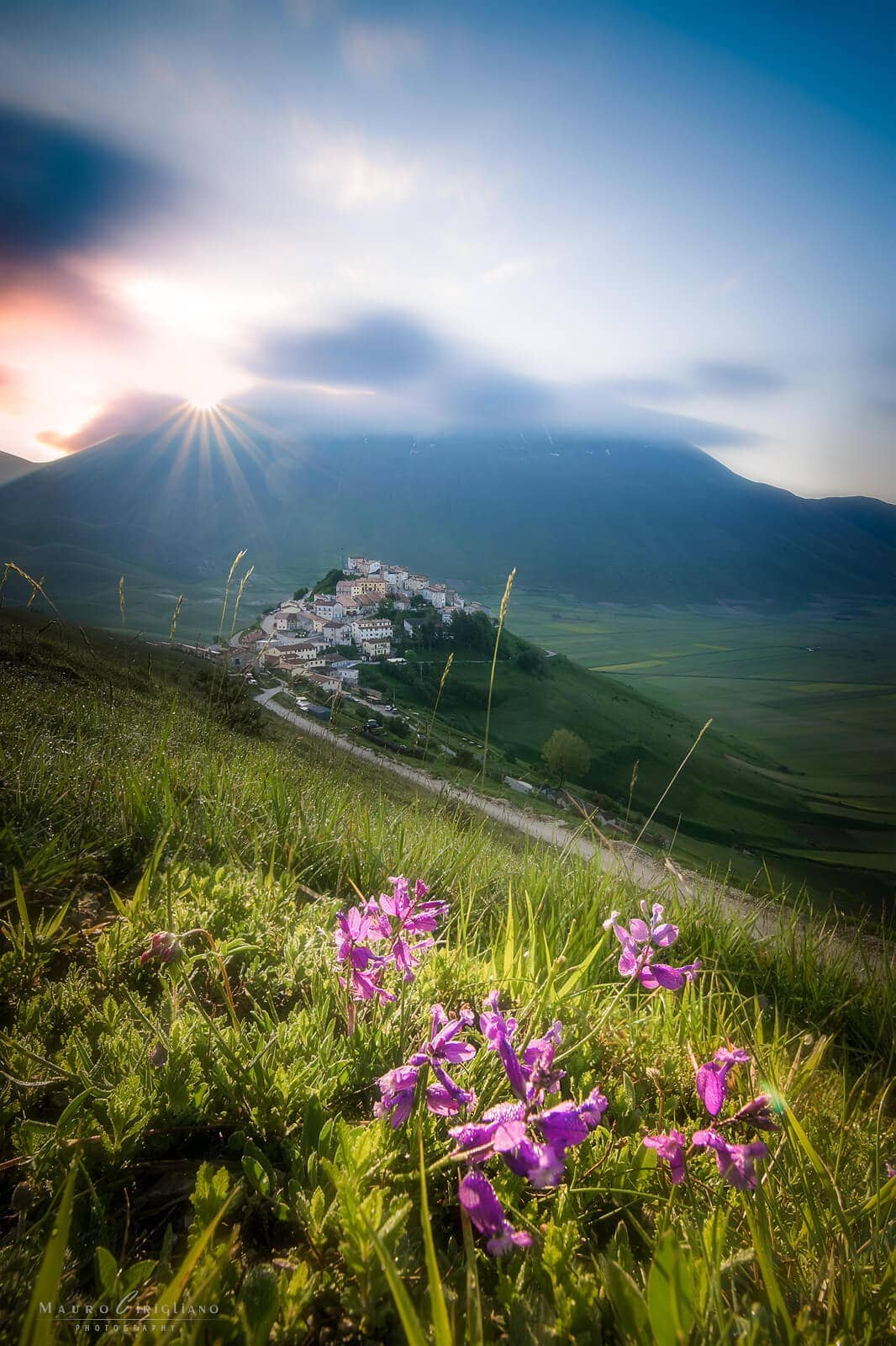 flowers with castelluccio and sunrise on background