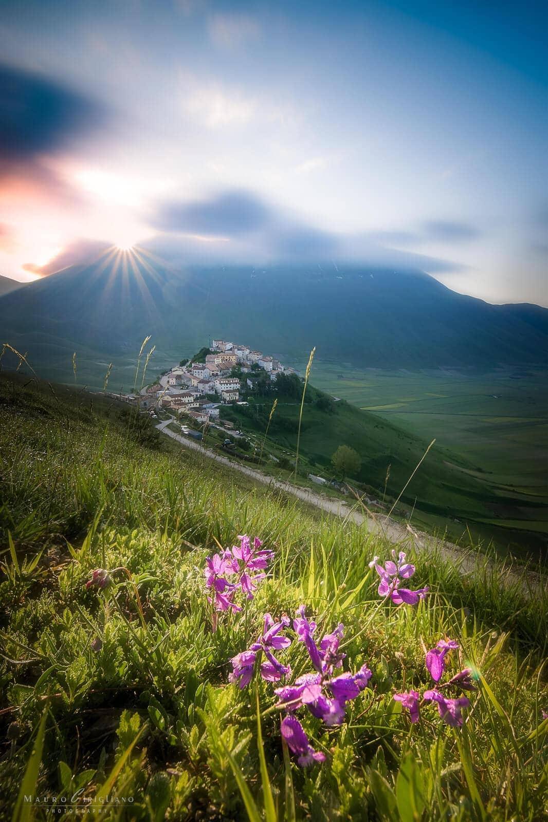 fiori con castelluccio e alba su sfondo