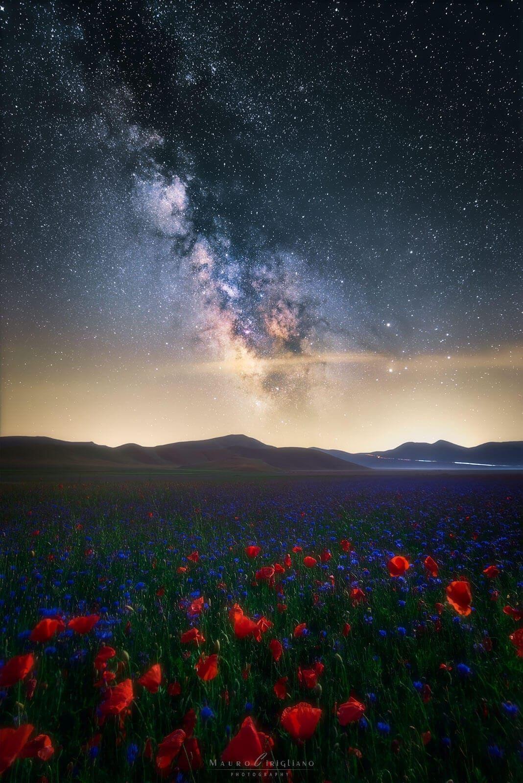 flowery field with milky way