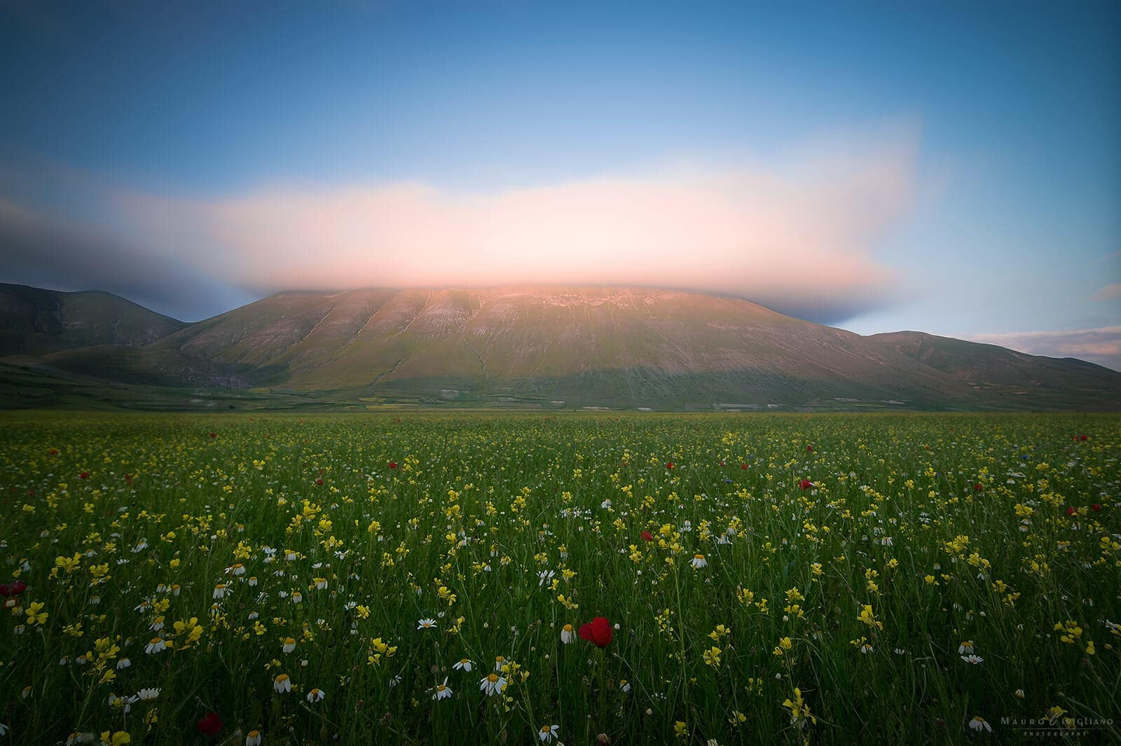 flowery field with mountain veiled by clouds