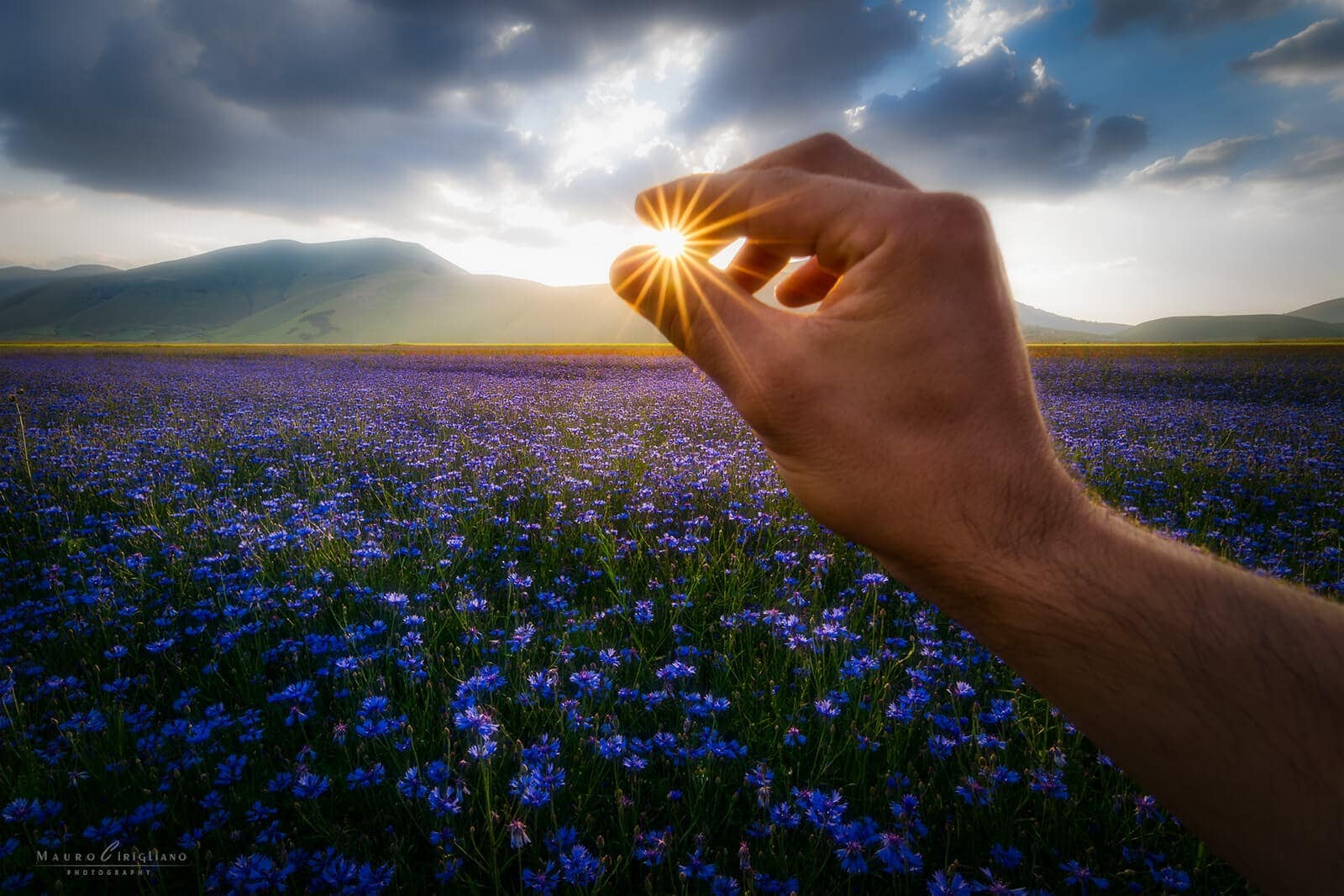 cornflowers field with hand touching the sun