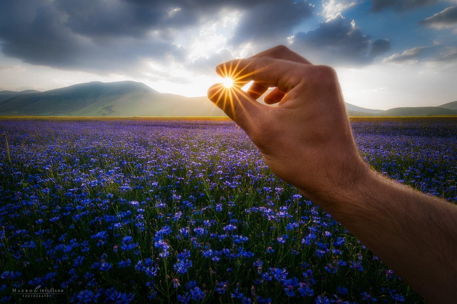 campo fiordalisi con mano che tocca il sole
