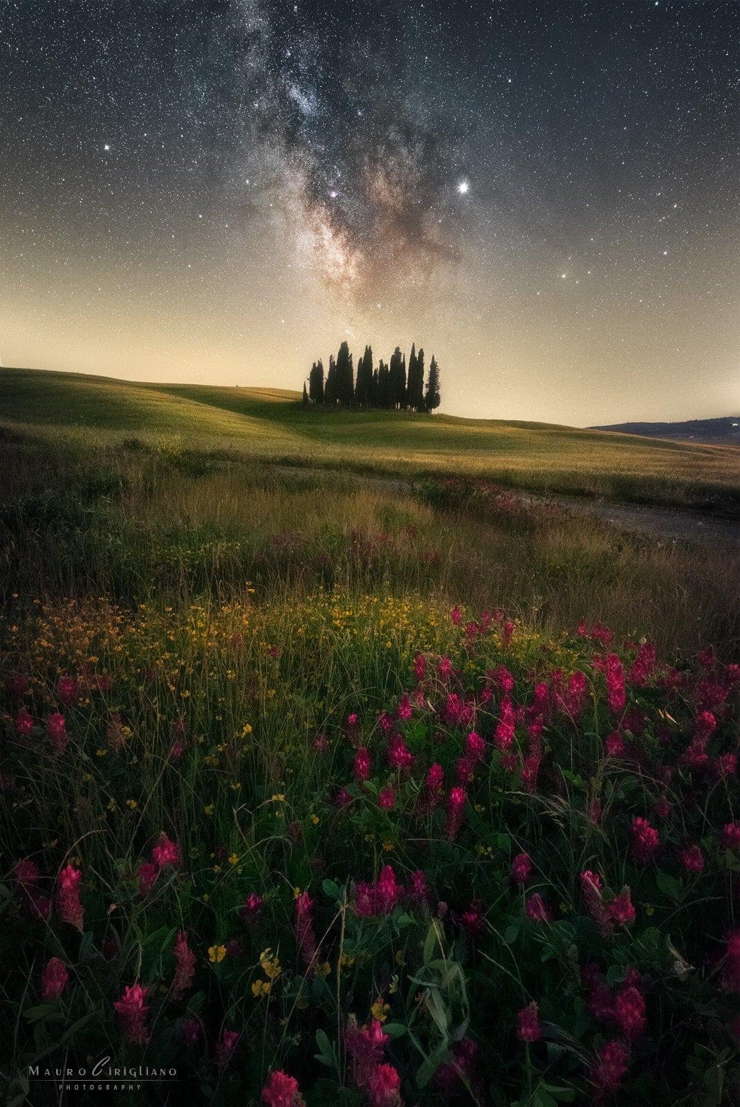 campo pianeggiante della toscana con fiori cipressi e stelle