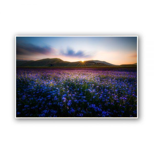 flowering castelluccio norcia print